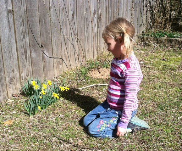 lily with daffodils 3-15  nest